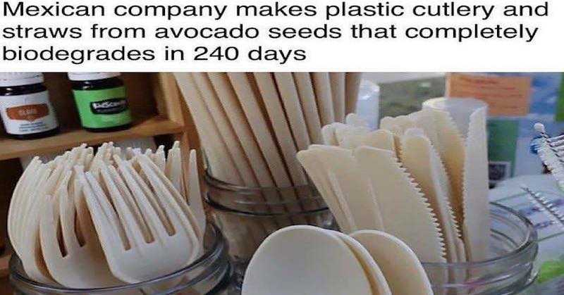 Mexican Company Converts Avocado Pits Into Biodegradable Plastic Straws and Cutlery